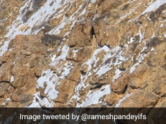 Can You Spot The Snow Leopard In This Image? The Internet Is Struggling