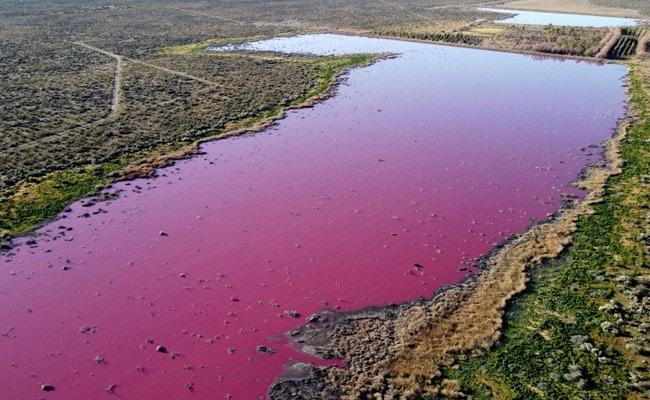 Pollution Turns Argentina Lagoon Bright Pink