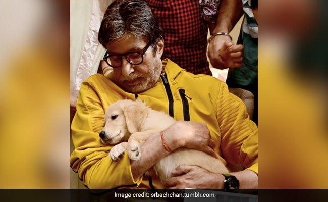 Amitabh Bachchan Almost Defied A Family 'Protocol' For His New Co-Star - This Adorable Fur-Ball