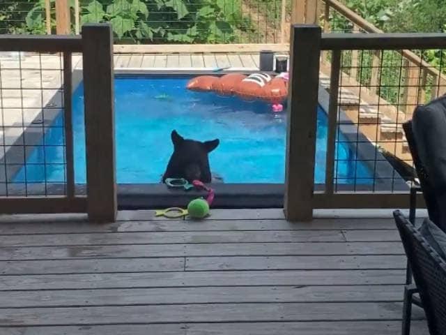 Video : स्विमिंग पूल में लेटकर भालू ने की मस्ती