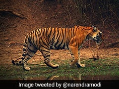 PM Modi Says India Is Committed To Ensuring Safe Habitats For Its Tigers