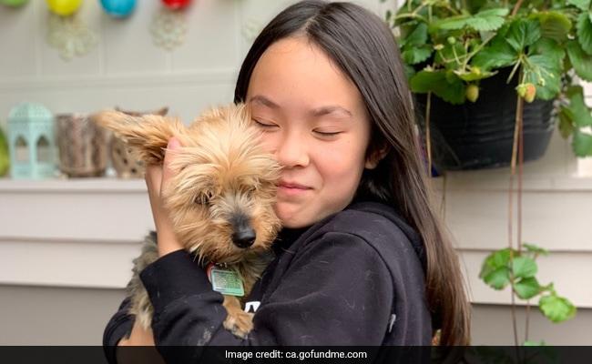 Vídeo: Brave Dog salva a una niña de 10 años del ataque de un coyote