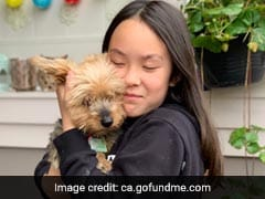 Watch: Brave Dog Saves 10-Year-Old Girl From Coyote Attack