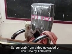 Viral Video: Monkey Takes Over Principal's Chair In Gwalior School