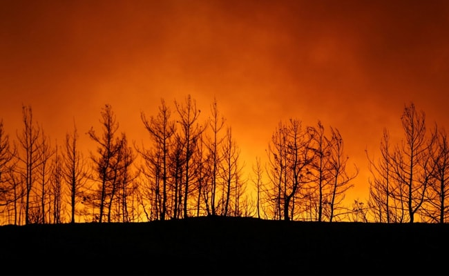 Four Killed As Wildfires Sweep Turkey, Villages Evacuated