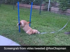 Jump? No, Slump. Puppy Refuses To Get Up During Training In Hilarious Video