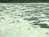 Video : Toxic Foam Floats On Yamuna In Delhi