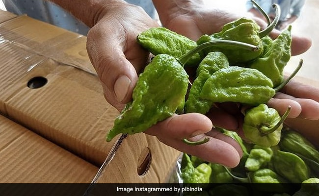 Bhut Jolokia Goes To London, With Love From India