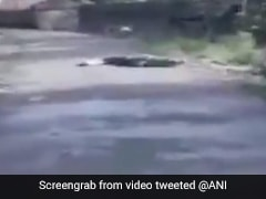 Watch: Crocodile Spotted Crossing Street In Flood-Battered Maharashtra