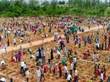Video : 1 Million Saplings Planted In An Hour In Telangana In New World Record
