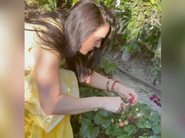 "Video : A Glimpse Of Preity Zinta's ""<i>Ghar Ki Kheti</i>"""