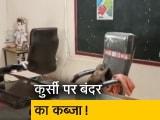 Video : मध्य प्रदेश: ग्वालियर में बंदर ने स्कूल प्रिंसिपल की कुर्सी पर किया कब्जा, वीडियो वायरल