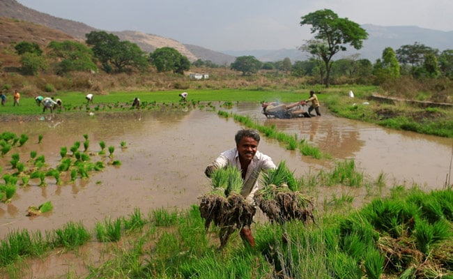 Farmers Planted 10% Lesser Summer Crops Than Last Year As Monsoon Recedes