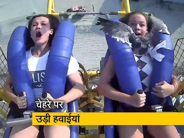 Video : देखें: रोलर कोस्टर की सवारी के दौरान लड़की के चेहरे से टकराया सीगल