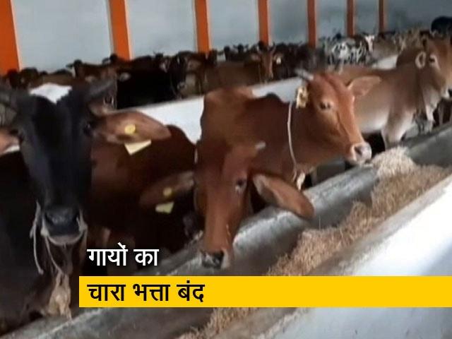 Videos : मध्य प्रदेश में मॉडल गौशाला फ्लॉप, गायों को चारा देने के लिए सरकार के पास नहीं हैं पैसे