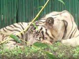 Video : Delhi Zoo Reopens In 2 Shifts With Online Ticket Facility After 105 Days