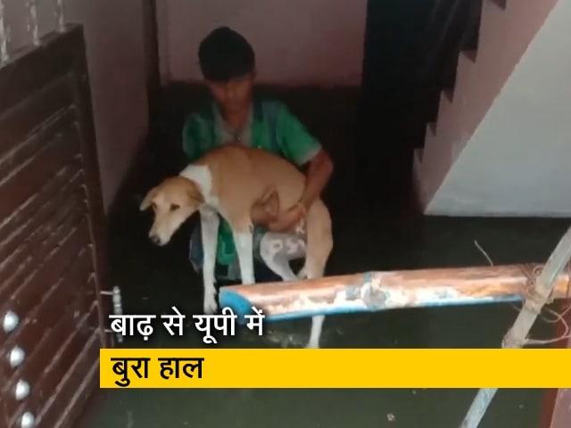 Video : प्रयागराज: गलियों में घुसा बाढ़ का पानी, घर में कैद हुए कुत्तों को ऐसे बचाया गया