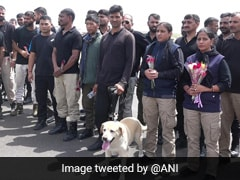 3 Sniffer Dogs Guarding India's Kabul Embassy Among Those Evacuated