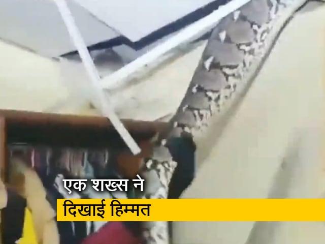 Video : दुकान की सीलिंग में छिपकर बैठा था विशालकाय सांप, ऐसे निकाला गया बाहर