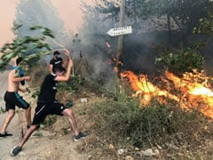 At Least 65 Killed In Algerian Wildfires