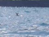 Video: झील में डूब रहा था हिरण फिर ऐसे बचाई गई जान
