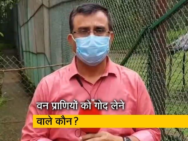Videos : शेर से लेकर तेंदुआ तक, किसने-किसे लिया गोद, बता रहे हैं वन अधिकारी विजय बारब्दे