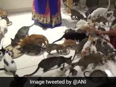 Gujarat Man Opens 'Cat Garden' For 200 Cats. It Has AC Rooms, Mini Theatre