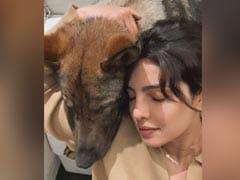 How Priyanka Chopra Made Pet Pooch Gino's 2nd Birthday Special