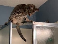 It's A Bad Idea To Climb The Shower, This Cat Learned The Hard Way. Watch