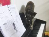 Video : बिल्ली ने शानदार तरीके से बजाया पियानो