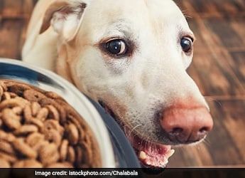 This Hilarious Video Of Dog Stealing Food From Kitchen Is Making Everyone Laugh