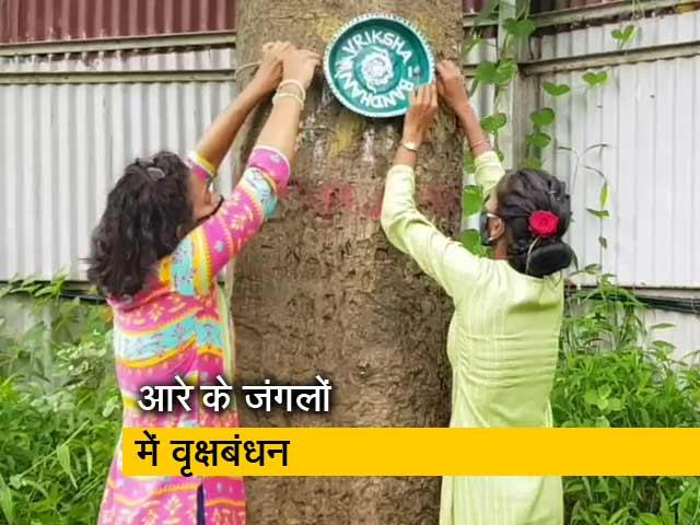 Video : मुंबई: लोगों ने आरे के जंगलों में लगे पेड़ों को बांधी राखी, रक्षा का लिया वचन