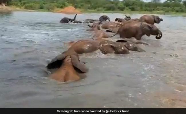 नदी में डुबकी लगा-लगाकर नहा रहे थे हाथी – देखें Video