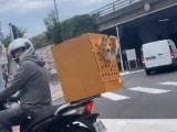 Video: स्कूटर के सेफ्टी बॉक्स में बैठकर कुत्ते ने की सवारी