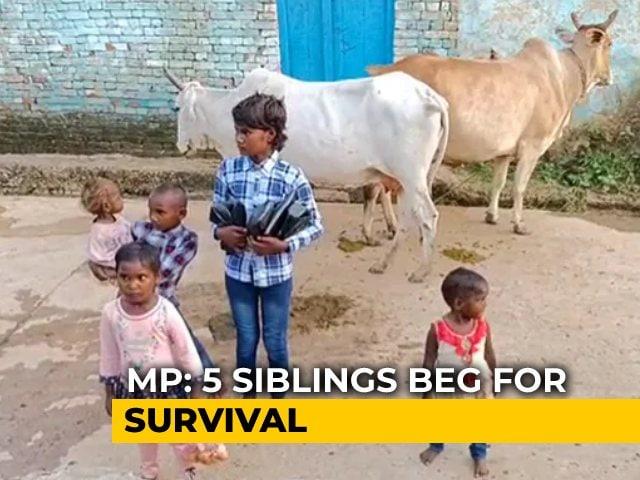 Video : In Madhya Pradesh, 5 Siblings Orphaned By COVID-19 Beg For Survival