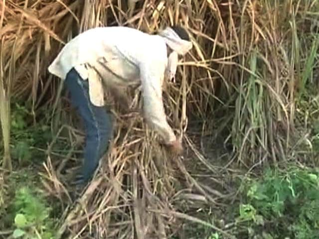 Video : UP Farmers Say Centre's Rs 5 Hike In Sugarcane Prices Not Enough