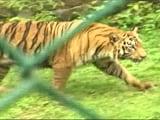 Video : Animal Adoption At Sanjay Gandhi National Park A Hit With Mumbai Citizens