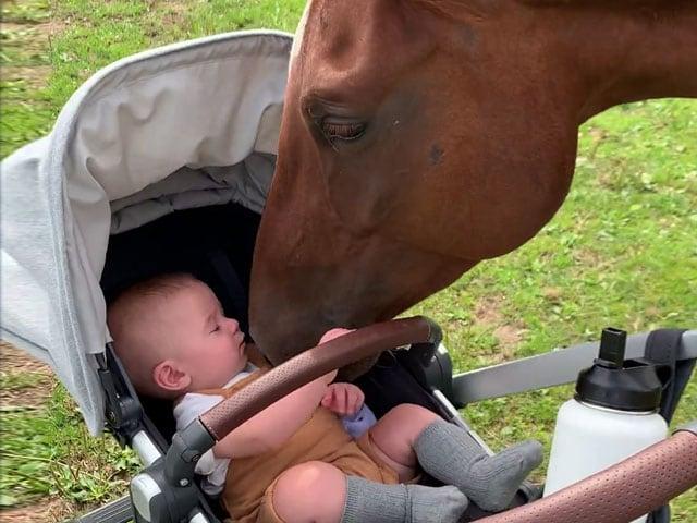 Videos : जब पहली बार घोड़े से मिला छोटा बच्चा