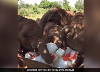 Watch: Baby Elephants Successfully 'Plotting A Milk Heist' Is The Best Thing On Internet Today