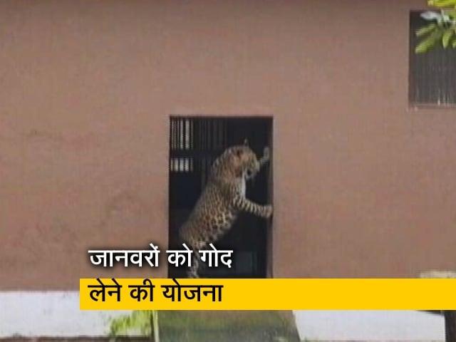 Video : संजय गांधी नेशनल पार्क के जानवरों को गोद लेने के लिए मची होड़, देखिए रिपोर्ट