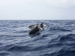 Man Found Surrounded By Dolphins After 12 Hours At Sea