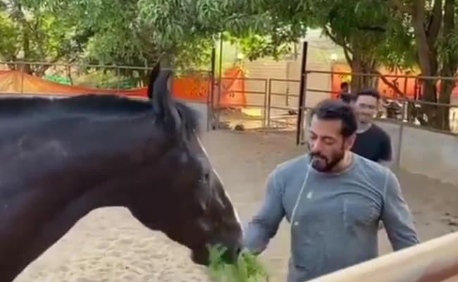 फार्म हाउस पर घोड़े को खिलाते हुए खुद उसका चारा खाने लगे सलमान खान, देखें वायरल Video
