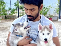 Meet Dhanush's New Partners-In-Crime, Husky Pups King And Kong