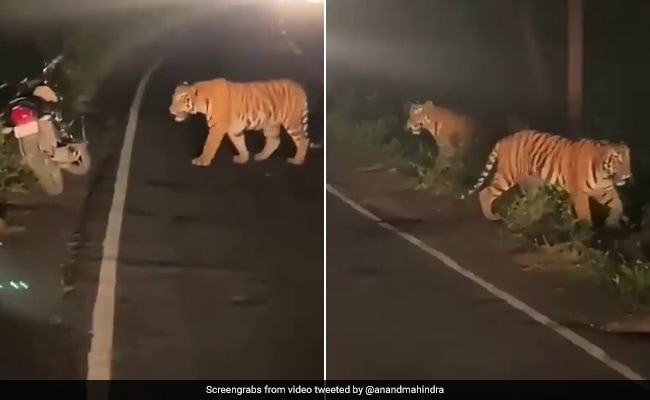 Tigers Bring Traffic To A Halt In Anand Mahindra's 'Magnificent' Video