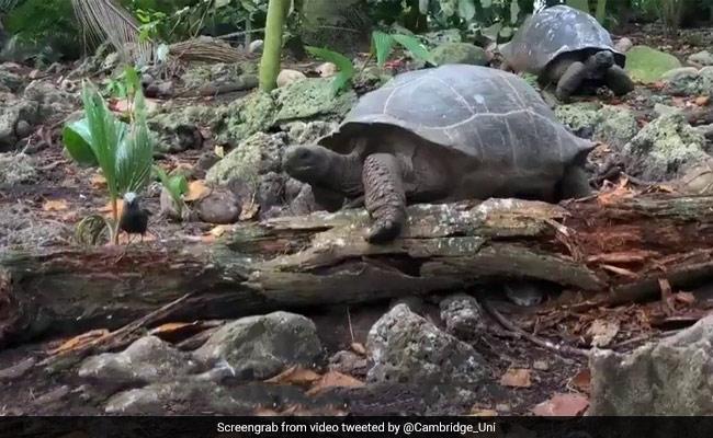 'Vegetarian' Giant Tortoise Eats Bird In 'Horrifying' Video