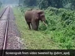 Watch: Loco Pilots Halt Train To Save Elephant Near Railway Track