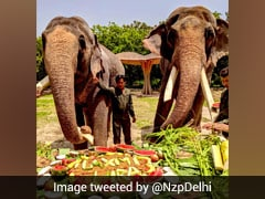 On World Elephant Day, A Special Treat For Jumbos At Delhi Zoo