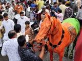 Video : BJP Flag Painted On Horse At Yatra, Maneka Gandhi's NGO Files Complaint