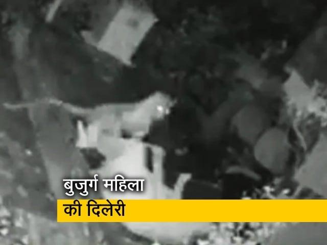 Videos : बुजुर्ग महिला ने किया तेंदुए का मुकाबला, कैमरे में कैद हुई घटना