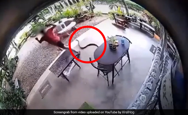 Watch: A Person Runs At Top Speed After Being Startled By Snake